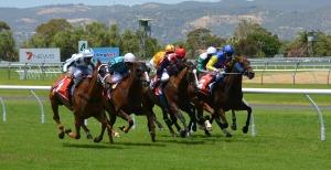 horse-racing-358907_1280